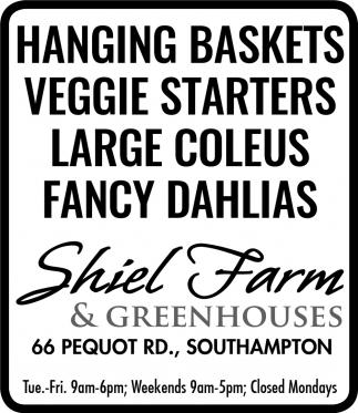 Veggie Starters